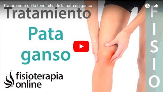 Tendinitis pata de ganso video | voyacorrer.com